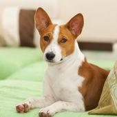 Kleine Hunderassen Von A Bis Z Komplette Liste Mit Bildern